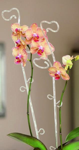 Orchideenstab in Weiß & Grün Transparent (39 cm & 59 cm länge)